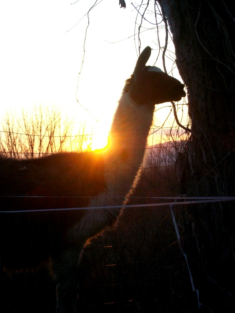 Van sunset light