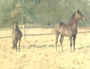 Amity and pony crop 1