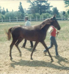 Amity as filly in show